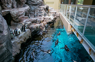 Penguin Pool(2F)